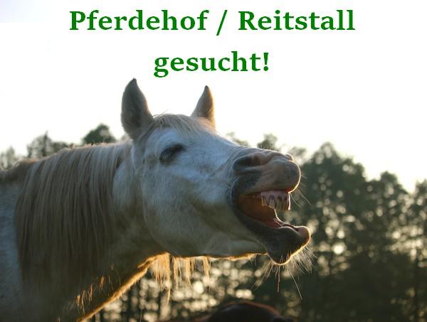 Gesuch +++ Pferdehof oder Reitstall in Bayern oder Baden-Württemberg zum Kauf oder zur Pacht